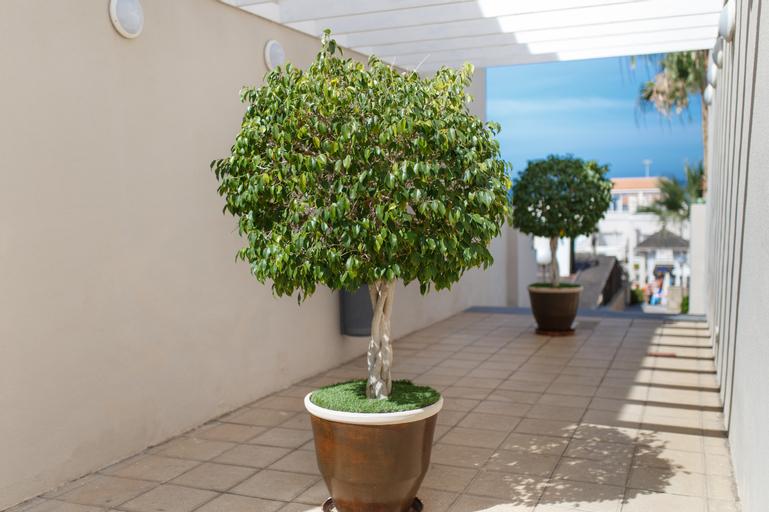 Los Olivos Beach Resort, Santa Cruz de Tenerife
