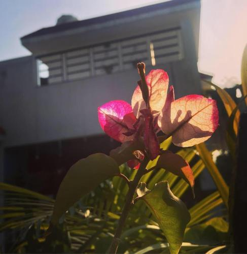 Maison Bella Vista Homestay, Gautam Buddha Nagar