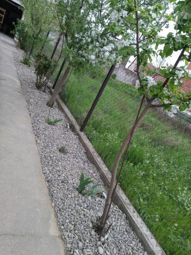 Petros apartmani, Vukovar