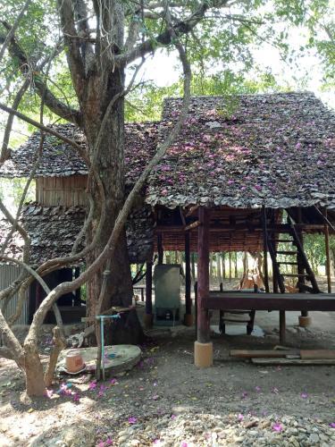 Tree House Village, Pai