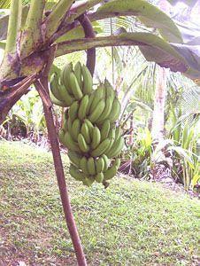Ceiba Country Inn,