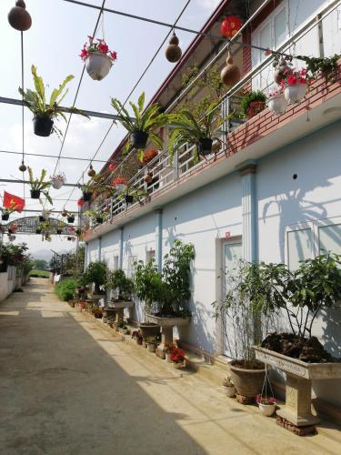 Quan Thu Guesthouse, Mộc Châu