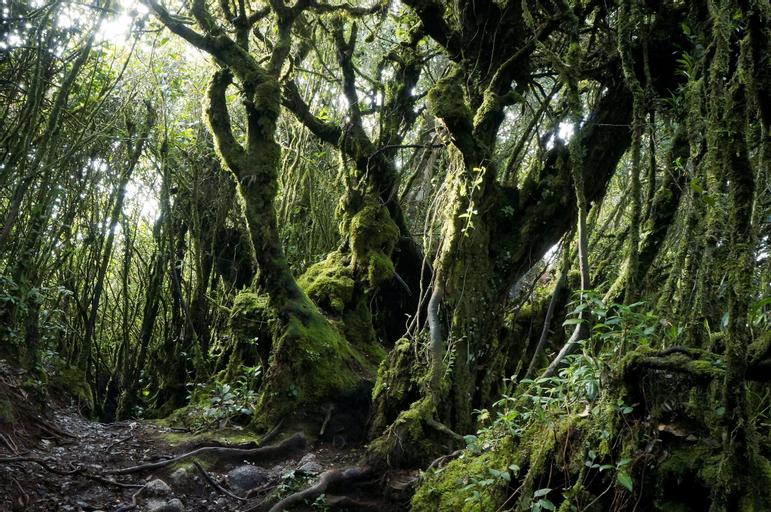 O.M.G Cameron Highland Golden Hill, Cameron Highlands