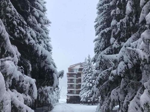 Bakuriani city apartment 201, Borjomi