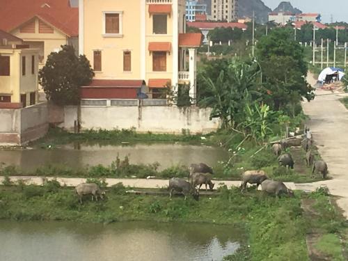 Lam's Homstay, Ninh Bình