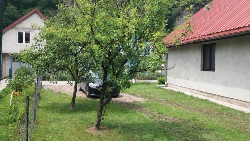 Home Scepanovic,