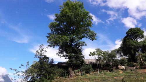 Big Tree Hmong Homestay, Sa Pa