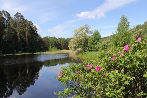 Forest Paradise, Zhytomyrs'ka