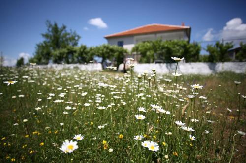 Agroturizem Lajthiza, Pukës
