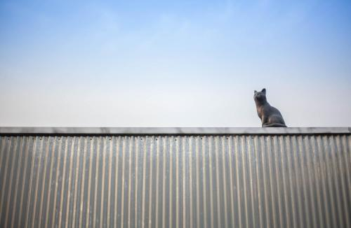 Cat on a Hot Tin Roof, Yangyang