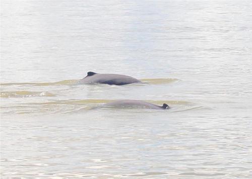 Kolapis Water Village Stays, Beluran