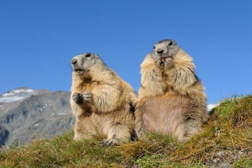 Huttenfeeling fur Backpackers , Treffpunkt beim Huttenwirt, Glarus