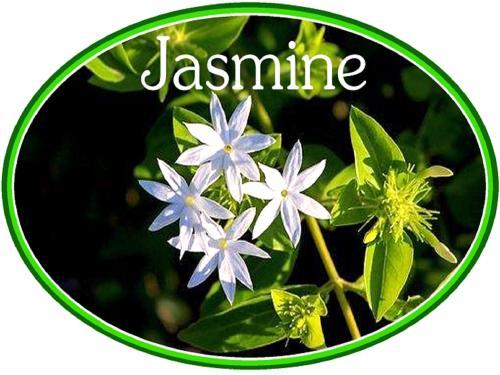 Jasmine Luxury Cottages, Xhariep