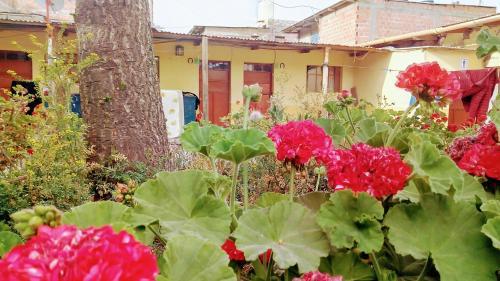 Hospedaje Los Pinos, Candarave