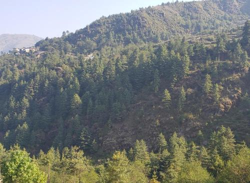 MIDWAY, Sagarmatha