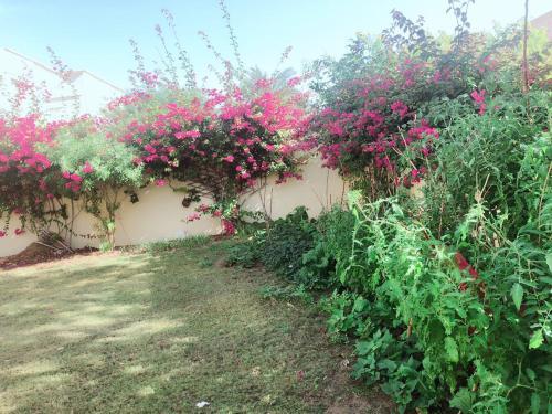 room for rent in dubai,