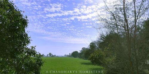 Chaudhary's Homestead, Jind