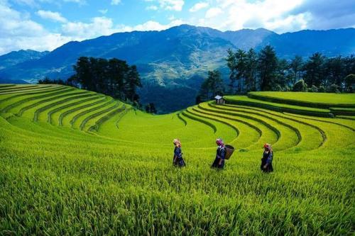 Nha Nghi Phu Ly, Mù Căng Trai
