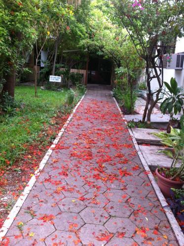 Jardin las palmas, Ciudad Valles