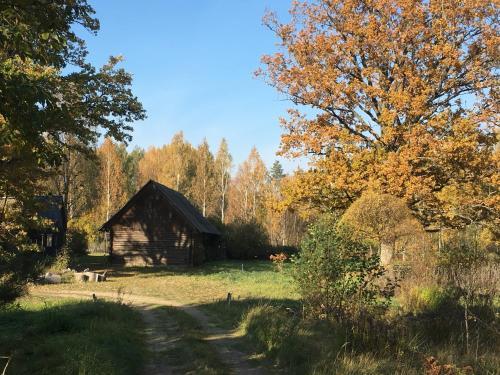 Drakanberki, Bauska