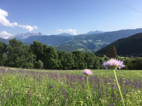 Obersteinerhof, Bolzano