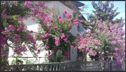 Casa Francesca in campagna, Rovigo