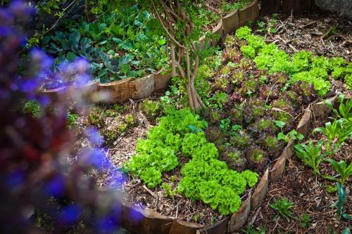 Organic Garden, Funchal