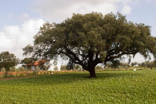 Monte Quinta Verde, Ferreira do Alentejo