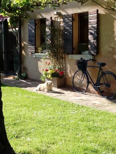 Haus heidi, Treviso