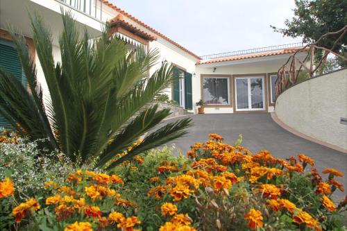 THEO'S HOUSE, Calheta