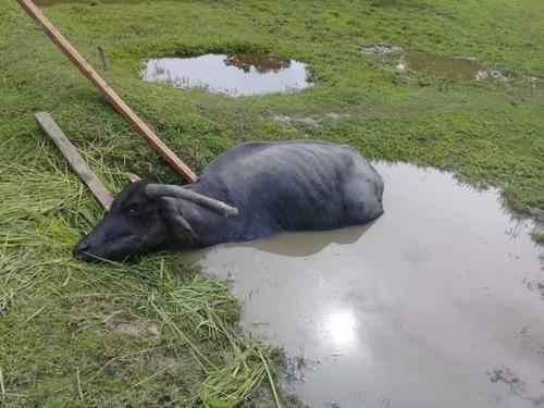 Fai Fai Farm, Muang Krabi