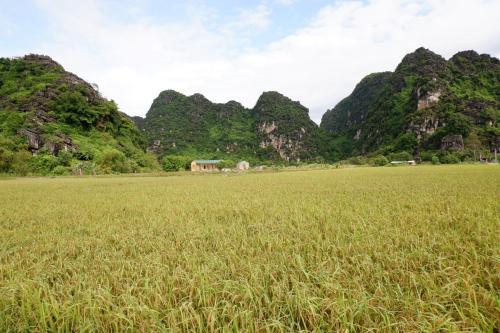Tre Xanh Homestay, Ninh Bình