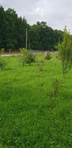 Pensiunea Padurea Verde, Mogesti