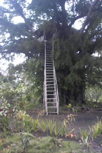 Volcano Horizon Tree House, Whitesands