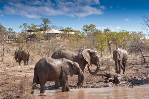The Elephant Camp, Hwange