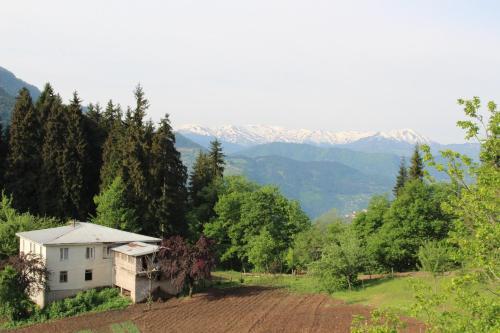 Tvaliakari, Khulo