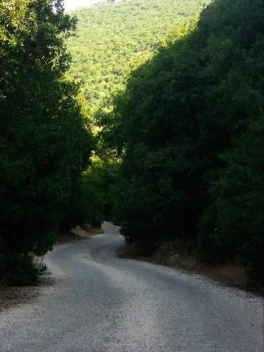 منتجع وادي البساتين عرجان, Mazar Shamali