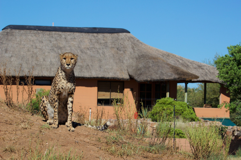 Babson House @ Cheetah Conservation Fund, Omatako