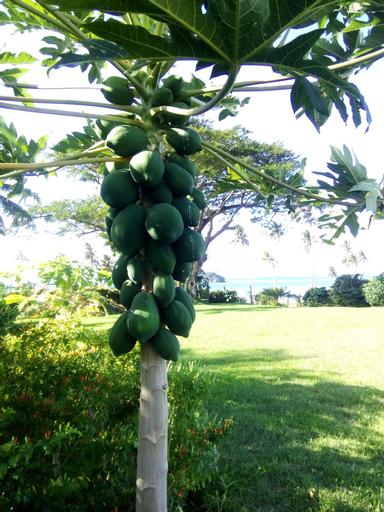 Raintree Gardens, Cakaudrove
