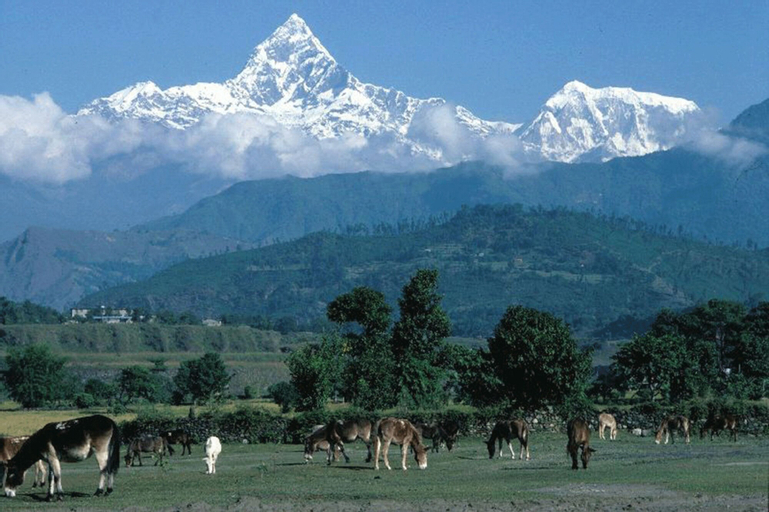 Pari Homestay, Bagmati