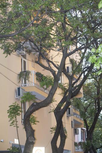 Hotel Vila Tako, Tiranës