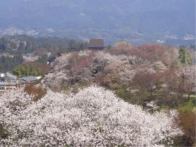 Ohbisou Taira, Yoshino