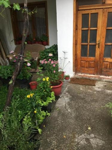 Vila Argis, Pogradecit
