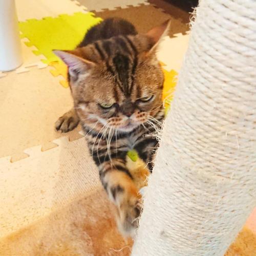 猫と断食の宿 Cat Inn Neko, Kunisaki
