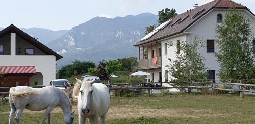Lipizzaner Lodge Guest House, Postojna