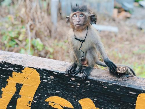 Monkey Bungalow, Ko Lanta