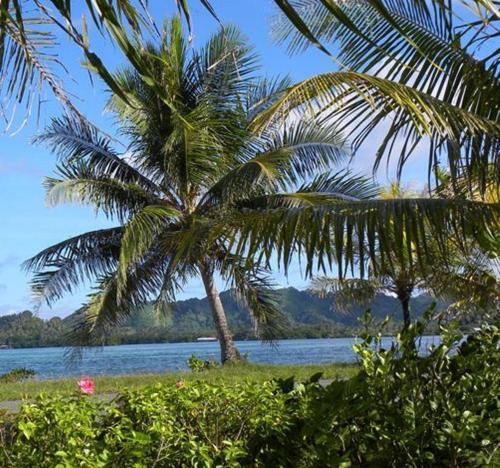 Pacific Treelodge Resort,