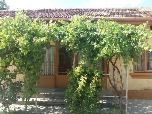 Garden's Guesthouse, Craiova