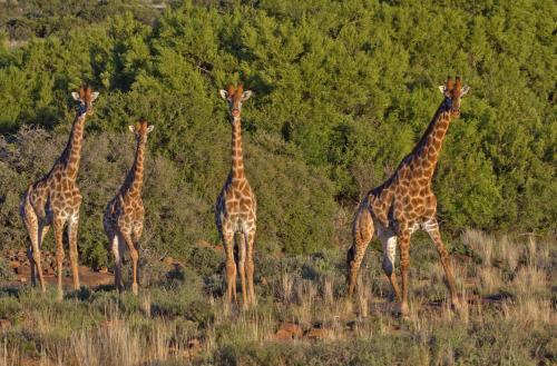 Ko Ka Tsara Bush Camp, Central Karoo