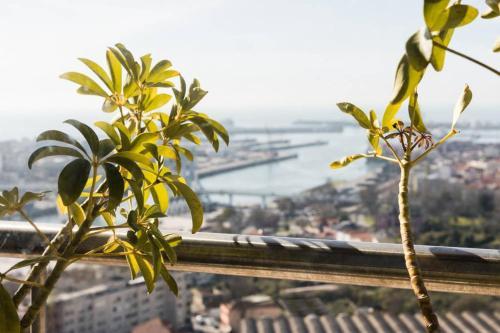 TPC - Royal Palms, Matosinhos
